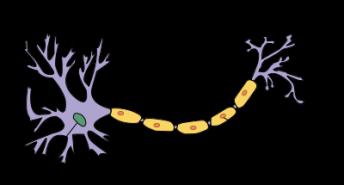 400px-neurone-francais-schema-svg
