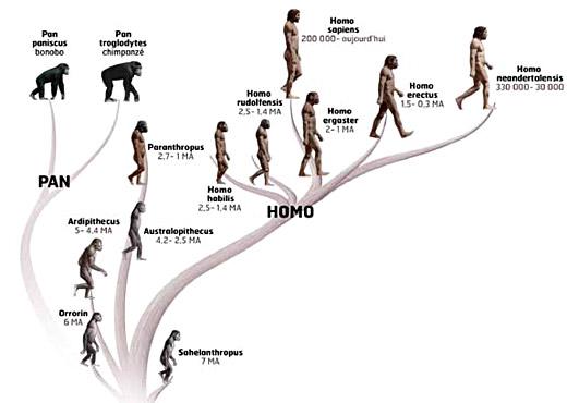 famille-des-hominides