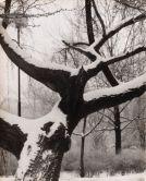 jan-lauschmann-1901-1991-stromy-1949