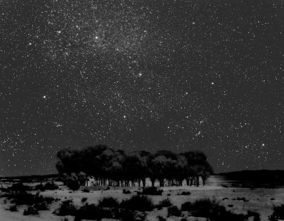 starry-grove