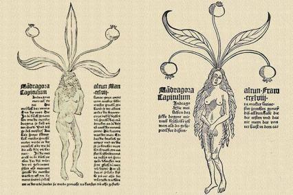 mandrages - Hortus Sanitatis de Mayence, 1485