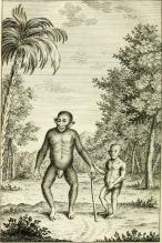 Vue_philosophique_de_la_gradation_naturelle_des_formes_de_l'etre,_ou_Les_essais_de_la_nature_qui_apprend_a_faire_l'homme_(1768)_(14744936716).jpg