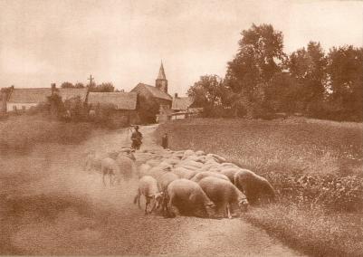Auguste Boutique - Retour du troupeau, 1905 (2).png